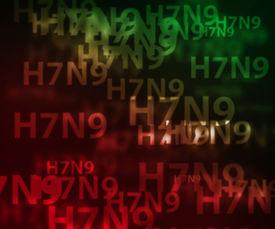 picture of avian flu  - H7N9 avian flu bokeh background - JPG