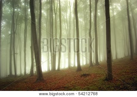 Beautiful forest with fog and sun light in summer