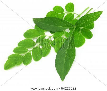 Medicinal Vitex Negundo With Moringa Leaves