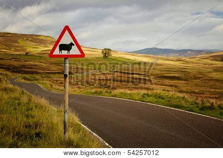 Sheep roadsign of a rural road into the Cairngorms, in Scotland, UK