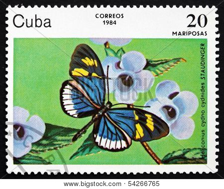 Postage Stamp Cuba 1984 Cydno Longwing, Butterfly