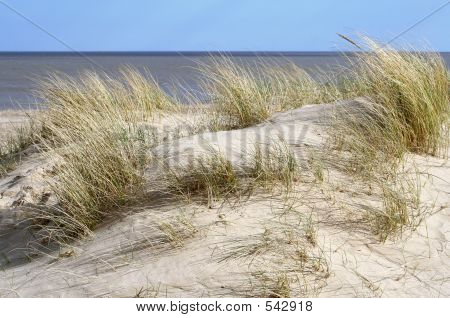 Tough Grass On Dune