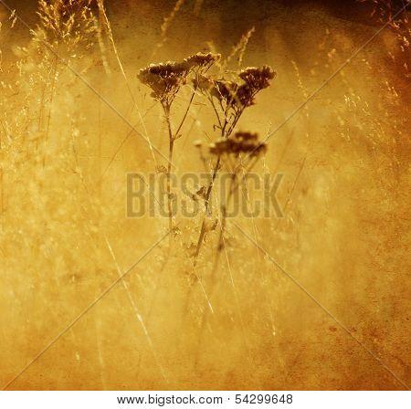 Textured Nature