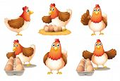 picture of egg-laying  - Illustration of the six hens on a white background - JPG