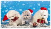 stock photo of wiener dog  - dog and cat and kitens wearing a santa hat - JPG