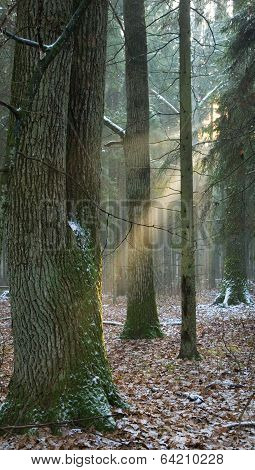 Light Entering Foggy Forest