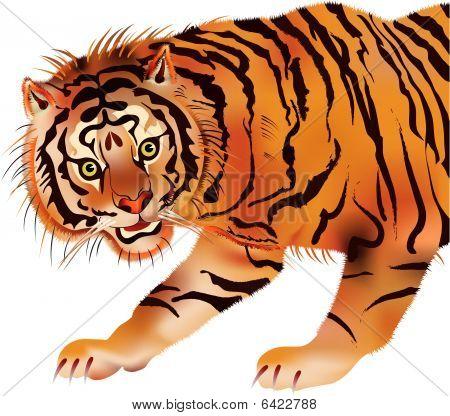 Tiger - Vector