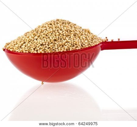 Amaranth popping, grain cereal in scoop close up isolated on white background