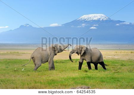 Elephant With Mount Kilimanjaro