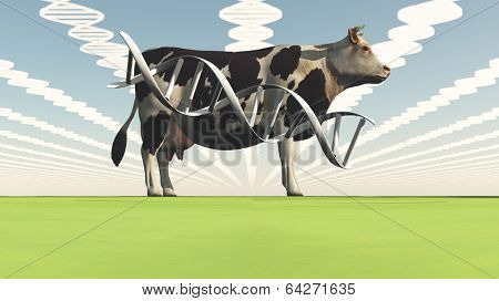 Genetically modified cow