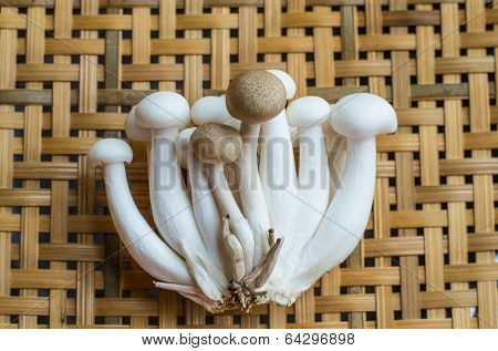 White Shimeji and brown beech mushrooms