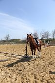 Purebred horse in paddock on nature background poster