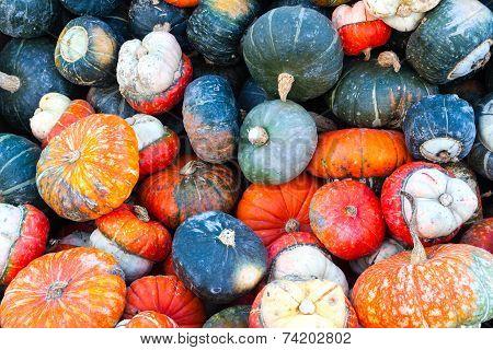 Colorful Miniature Pumpkins