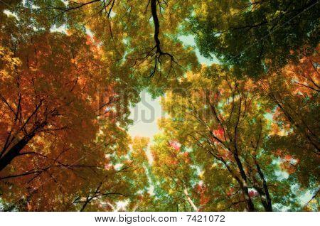 Trees In Orton