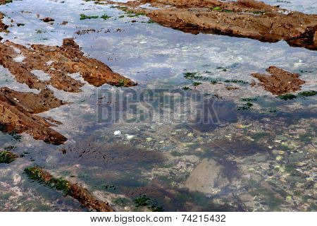 Beautiful seascape. Puddle of water on the rock at low tide