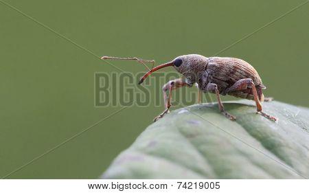 macro image of a little bug.