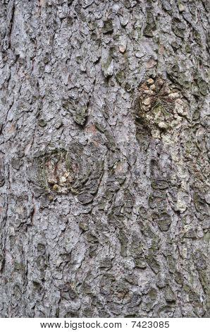 Old Fir Bark Texture