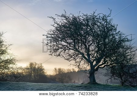 Barren tree on grassy hill