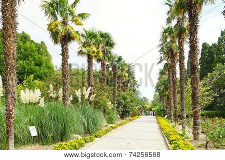 People On Palm Alley In Nikitsky Botanical Garden
