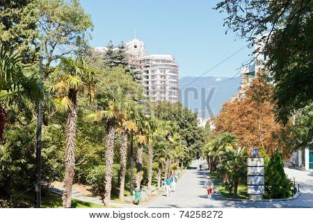 People On Palm Alley In Primorskiy Park In Yalta