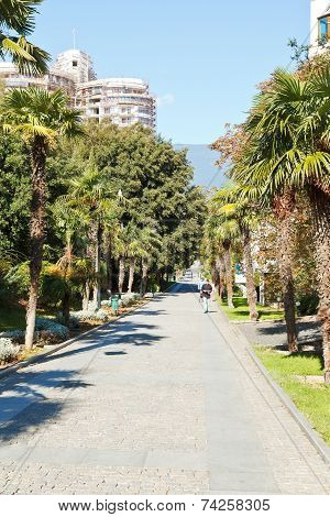 Palm Alley In Primorskiy Park Inyalta, Crimea