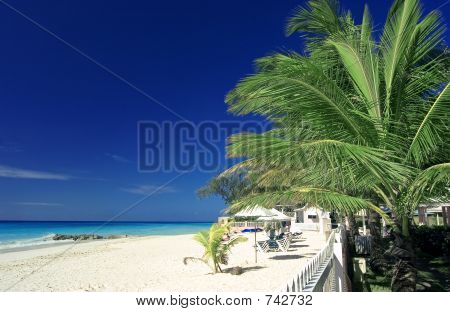 Palm Tree And Beach