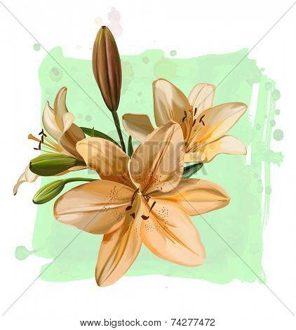 Vector drawing branch lily flowers on watercolor background