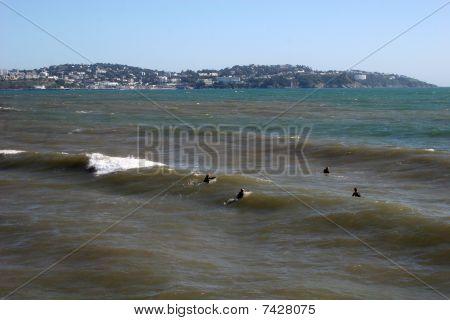surf on Paignton beach