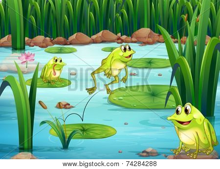 Illustration of many frogs in the pond