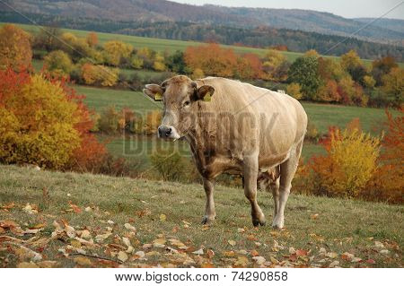 In the pasture in the foothills on autumn