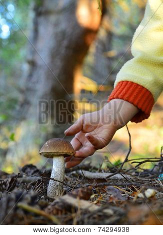 Little Hand  And Mushroom