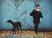 foto of greyhounds  - Young attractive girl dressed elegantly walks with the dog greyhound autumn outdoors - JPG
