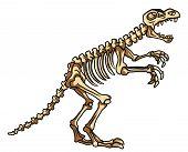 image of dinosaur skeleton  - dinosaur fossil Editable  - JPG