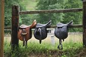 pic of girth  - Leather saddles ready to put on the horseback - JPG
