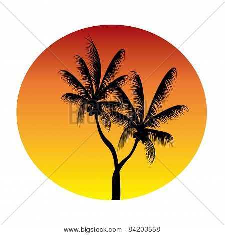 Palms In Sunset Circle