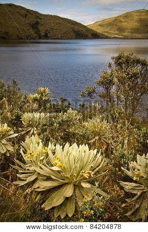 El Angel, ecological reserve, Carchi, Ecuador