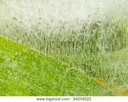 Bubbles On Green Surface