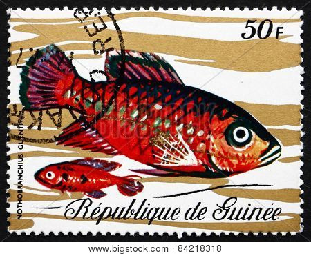 Postage Stamp Guinea 1971 Guentheri Killifish