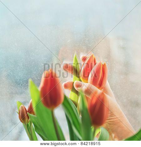 Arranging Bouquete