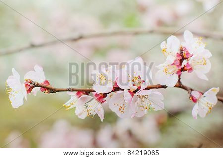 Flowers on branches in the spring.