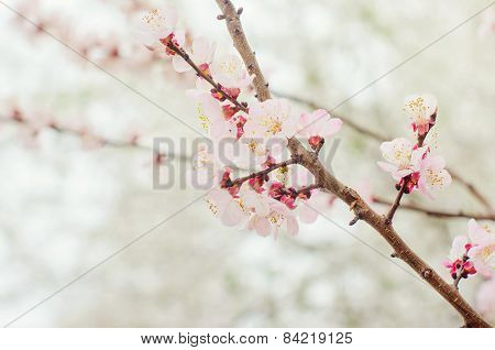Flowers on branches of trees.