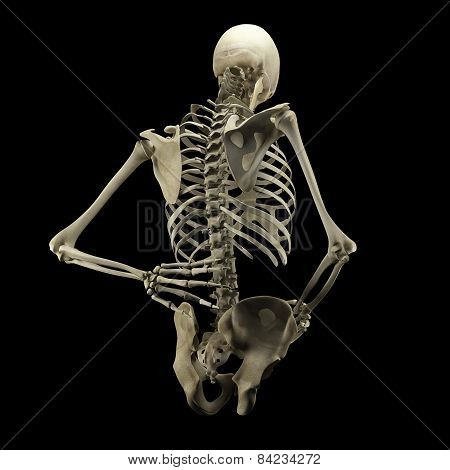 Human Skeleton Isolated On Black Background
