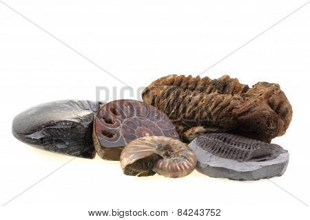 Old Fossils Collection