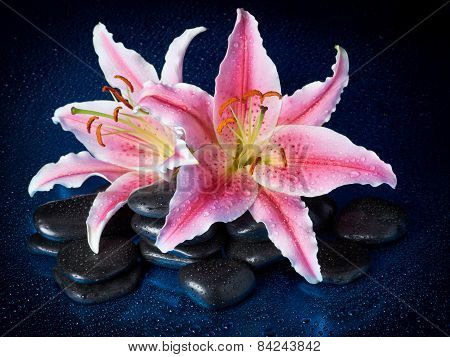 Spa Stones And Lily Flowers With Reflection