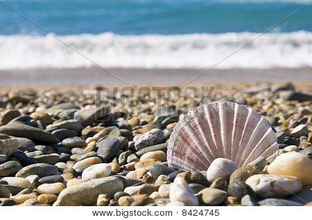 Shell And Small Stones