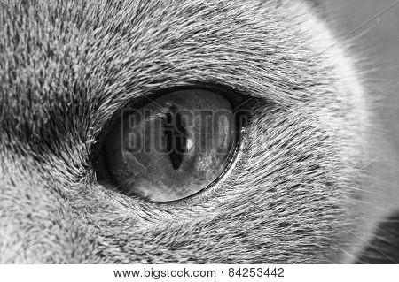 The Yellow Cat's Eye