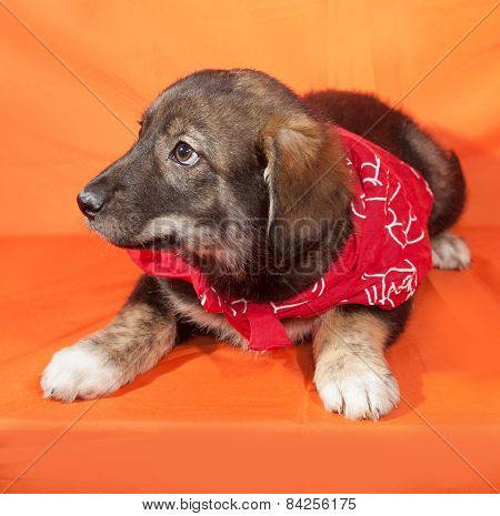 Brown Puppy In Red Bandanna Lying On Orange