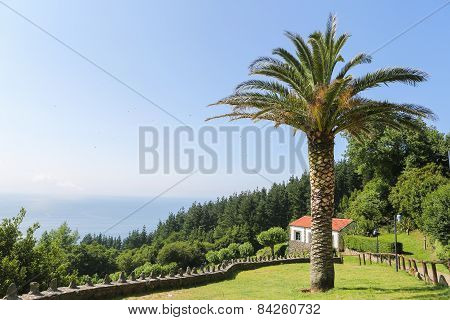 Beautiful Landscape With Palmtree And House In San Andres, Galicia, Spain