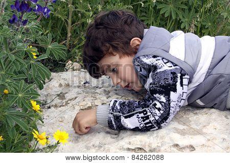 Little Boy Watching Ants