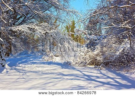 Winter scene after a snowstorm in Washington DC USA.